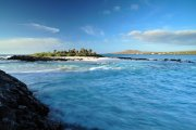 Galapagos - Floreana - Loberia