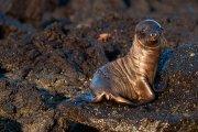 Galapagos - Floreana- Loberia
