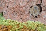 Sur Lipez desert - Bolivia