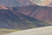 Colours near Salar Aguas Calientes