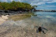 Galapagos - Isabela