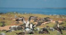 Galapagos - Santa Cruz